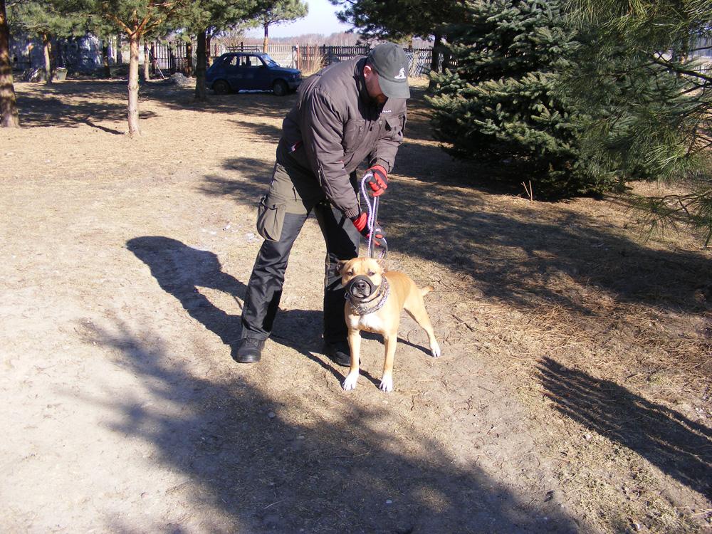 Zdrowy silny pies