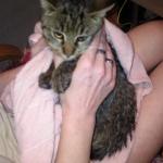 Kotek po kąpieli