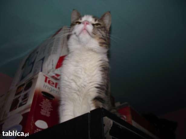 Kotka bez rodowodu