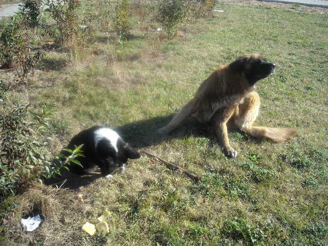 Pieski mieszane do adopcji